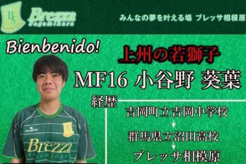 トップチーム新加入・小谷野葵葉選手